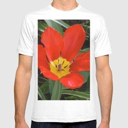 Red Flower (Tulip) T-shirt
