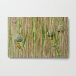 Golden Weavers Metal Print