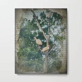White Ibis Birds Roost Lake Waccamaw Green Swamp NC Metal Print