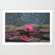 Lillies Art Print