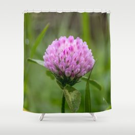 Red clover Shower Curtain