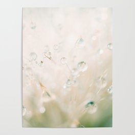 winter reflected in the morning dew Poster