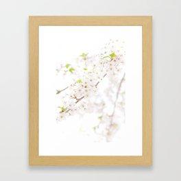 Sakura Trails Framed Art Print