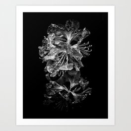 Backyard Flowers In Black And White 1 After The Storm Art Print