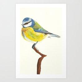 Winter Birds- Blue Tit Art Print