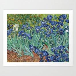 Irises by Vincent van Gogh Art Print