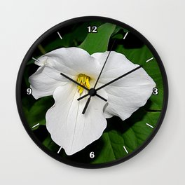 Trillium in the spotlight Wall Clock