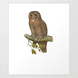 Lonely Owl Realistic Painting Art Print