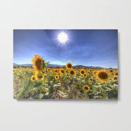 Sunflower Summer Days Metal Print