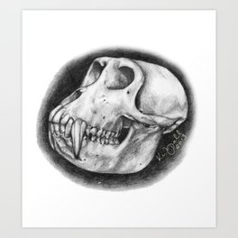 Baboon Skull Drawing Art Print