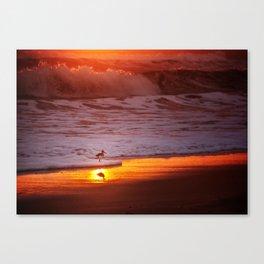 Sunny Sandpiper Canvas Print