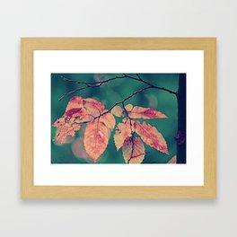 Yesterday autumn leaves in botanic garden Framed Art Print