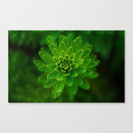 Water plant-green Canvas Print