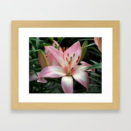 Pastel Lily Framed Art Print