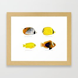 Plate of Tropical Fish Framed Art Print