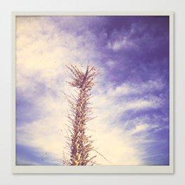 desert llama Canvas Print