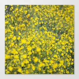 Beautiful shiny yellow Canvas Print
