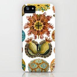 Ernst Haeckel Ascidiae Sea Squirts iPhone Case