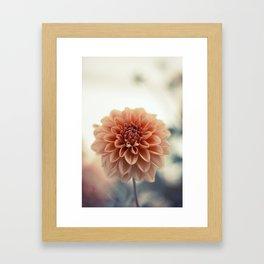 Dahlia Flower Framed Art Print