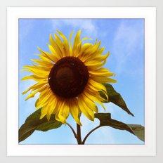 Blue Sky Sunflower Art Print