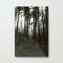 Forest Park III Metal Print