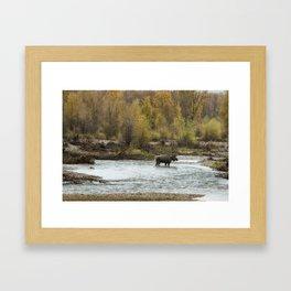 Moose Mid-Stream - Grand Tetons Framed Art Print