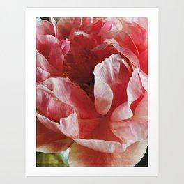 Peach Peony II Art Print