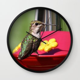 Fisheye Hummingbird Wall Clock