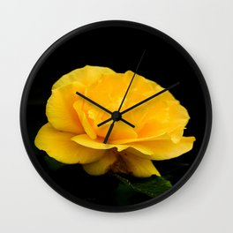 Golden Yellow Rose Isolated on Black Background Wall Clock