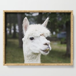 A llama peers at a passerby from its copse on a farm near Plato in LaGrange County Indiana Serving Tray