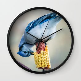 Blue Jay on corn cob Wall Clock