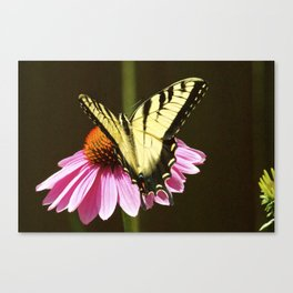 Tiger Swallowtail Butterfly - Open Wings Canvas Print