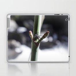 Fly, Battle Creek Falls Laptop & iPad Skin