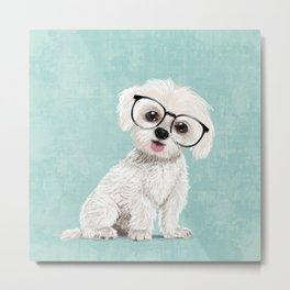 Mr Maltese Metal Print
