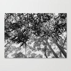 A Walk in the Clouds #4 Canvas Print