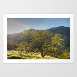 Sun and Tree Art Print