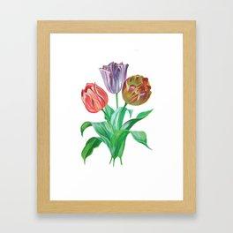 Tulip Trio Framed Art Print