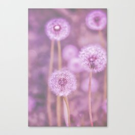 Romantik pink dandelion flower meadow Canvas Print