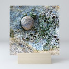 Nacre rock with sea snail Mini Art Print