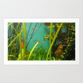 acvarium - fish kiss Art Print