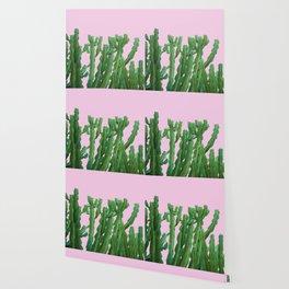 Pink Italian Cactus Wallpaper