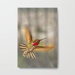 A Hummingbird Displays It Aerobatic Skills Metal Print