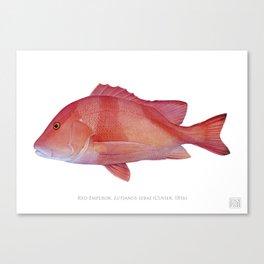 Red Emperor Canvas Print