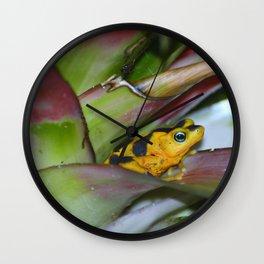 Panamanian Golden Frog Wall Clock