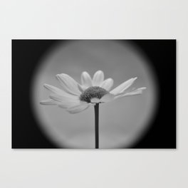 Flower No.5 Canvas Print