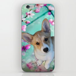 cuty cute corgi puppy of the queen of england Elisabeth, spring blue pink flower power blossom iPhone Skin