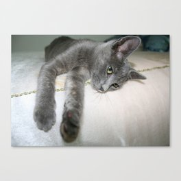 Russian Grey Cross Tabby Cat  Canvas Print