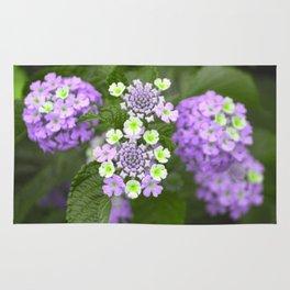 Lavender Floral Rug