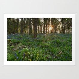 Bluebell Sunrise Art Print
