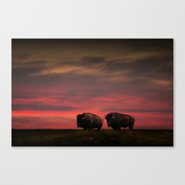 Two American Buffalo Bison at Sunset Canvas Print